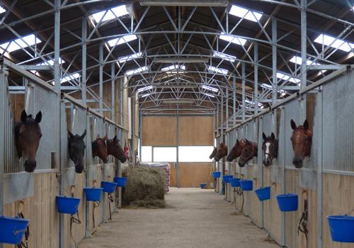 Le barn flambant neuf accueille poulinières et jeunes chevaux