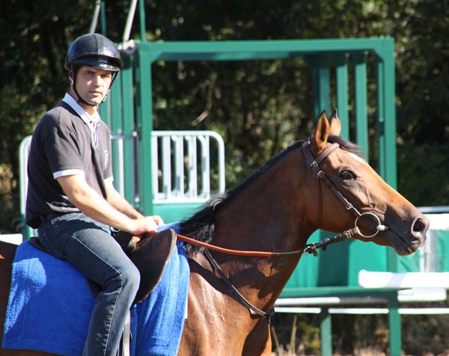 Yann Creff à cheval